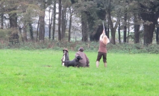 driven-shooting-sporting-estate-northern-ireland-06